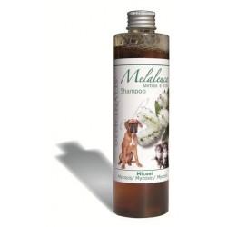 Shampoo alla Malaleuca
